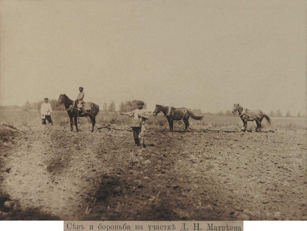 Сев и боронование в конце XIX вФотография А.И.Кочешева конец XIX.